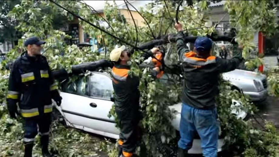 (foto, video) Consecințele furtunii din Chișinău: Un copac a căzut peste două mașini, în care se aflau trei persoane