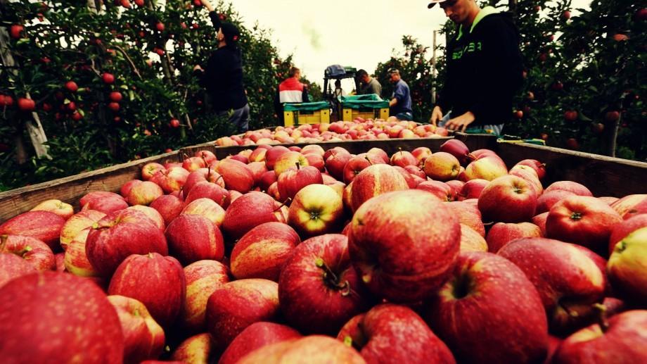 43 de companii din Moldova vor putea să-și exporte fructele în Federația Rusă