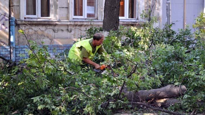 Sâmbătă este zi sanitară, autoritățile anunță începerea lucrărilor de defrișare și curățare a copacilor