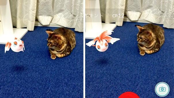 (foto) Supoziție: Animalele de companie văd pokemonii. Urmărește care este reacția viețuitoarelor