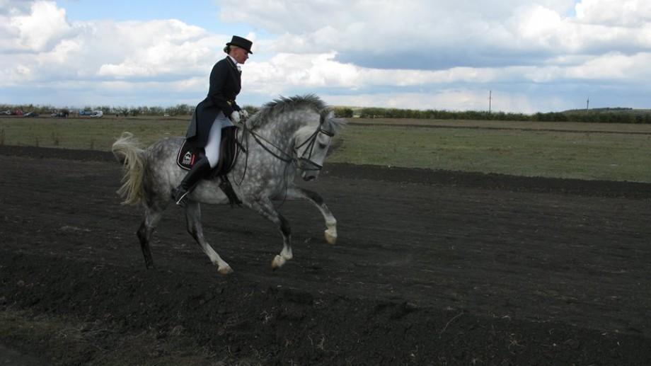 (foto) Reînviem tradiția alergărilor de cai. O competiție de hipism te așteaptă duminica viitoare la Cimișlia