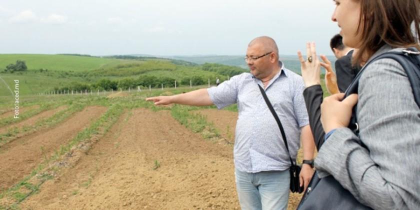 Cum crește o plantație moldovenească de afine pe pământ din Belarus: Pomușoarele încă nu pot fi exportate