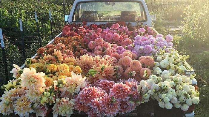 (foto) Cum e să ai toată viața brațele pline cu flori. Povestea unei florărese în imaginile de pe Instagram