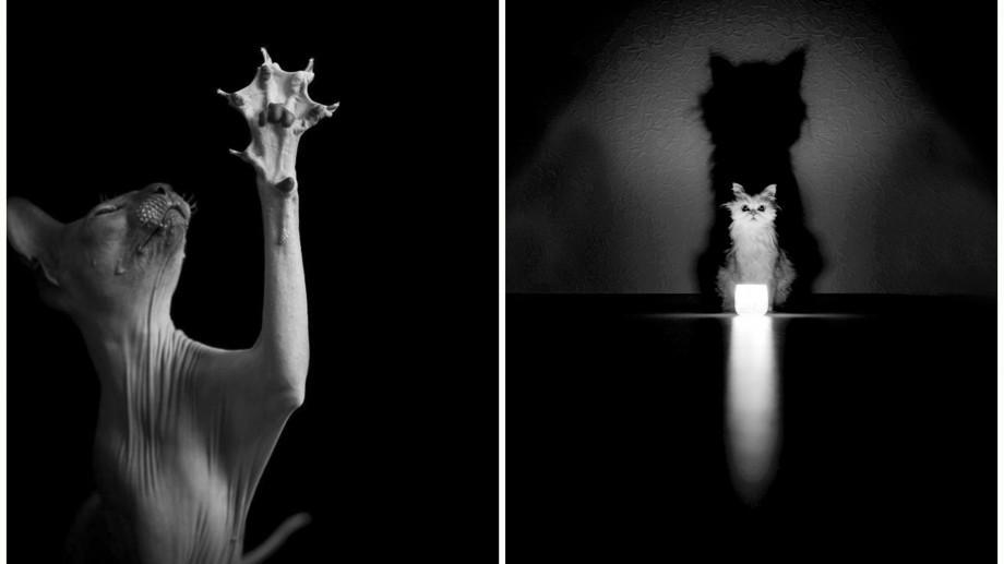 (foto) Cum arată viața misterioasă a 15 pisici arătată în nuanțe de alb negru într-un proiect fotografic