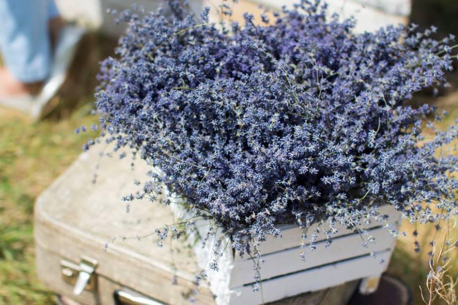 Lavender Fest / Alina Josan