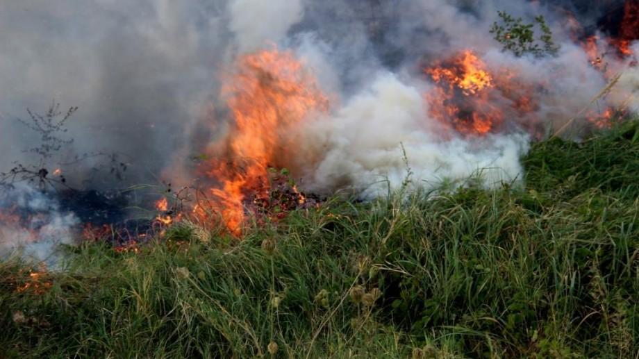 (video) Două familii au fost salvate! Peste 80 focare de vegetație înregistrate în ultimele 24 de ore