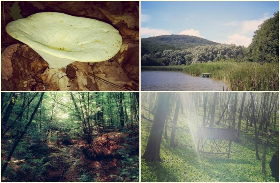 (foto) Țara mea pe Instagram: Plaiul Fagului – un loc al regenerării ecologice din zona Codrului