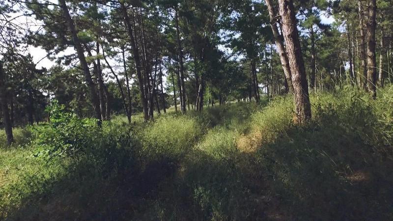 Tinerii din Peresecina vor să reamenajeze parcul din localitate. Vino să sădești un tei ce-ți va purta numele
