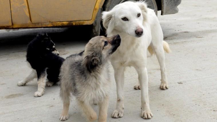 Tinerii de la Cahul luptă cu problema câinilor vagabonzi. Iată cum îi poți ajuta printr-un vot