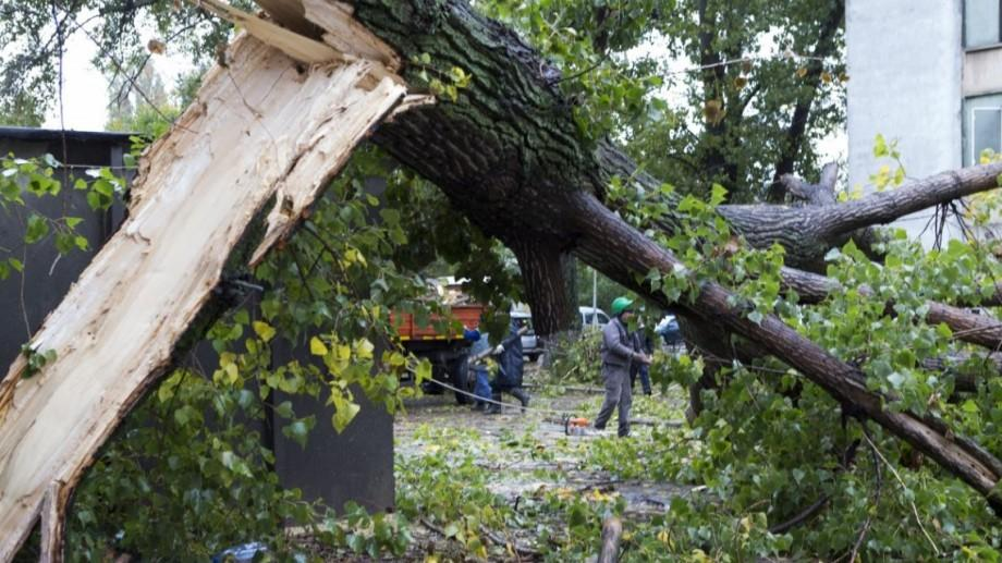 Vântul de noaptea trecută a doborât 13 arbori. Două automobile au fost deteriorate