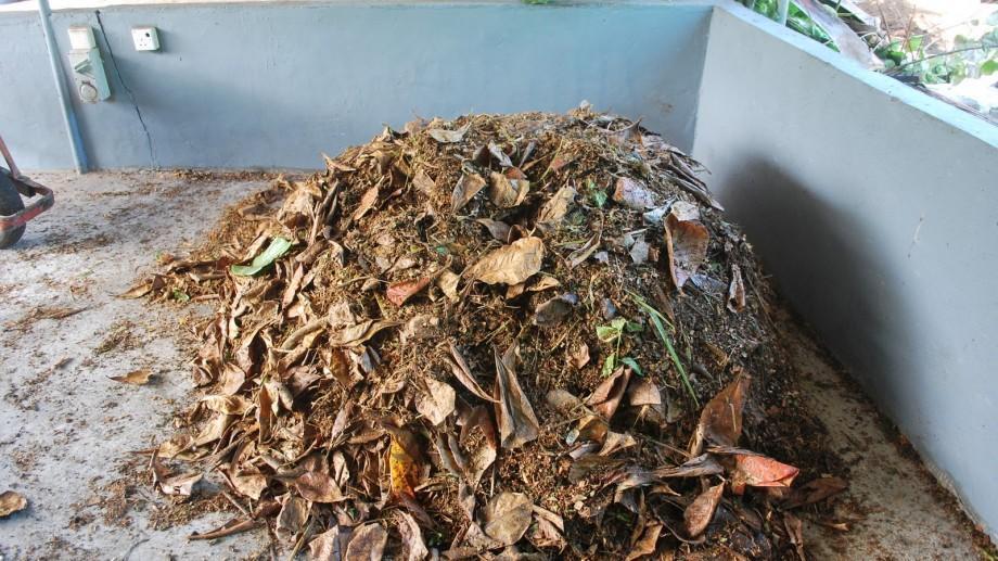E bine să știi! Unde pot fi transportate deșeurile vegetale precum frunzele uscate sau crengile