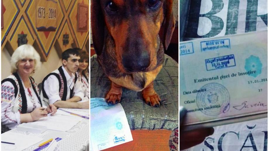 (foto) Cei mai activi internauți s-au prezentat la vot! Cum se mobilizează alegătorii pe rețelele de socializare