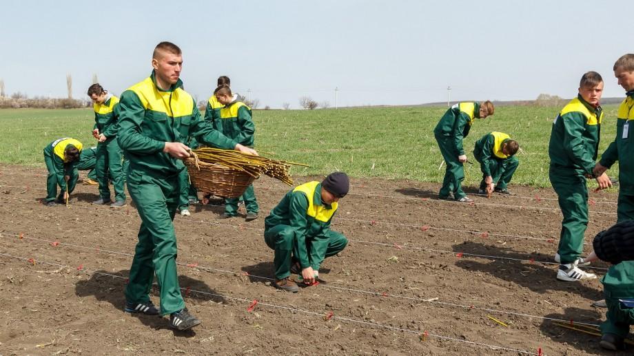(foto) Europa pentru Moldova: Elevii a două școli profesionale din Moldova vor întreține 4 hectare de salcie energetică