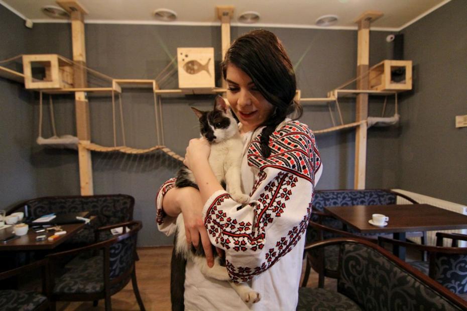 Cafeneaua Lady Cat PC: transilvaniareporter.ro