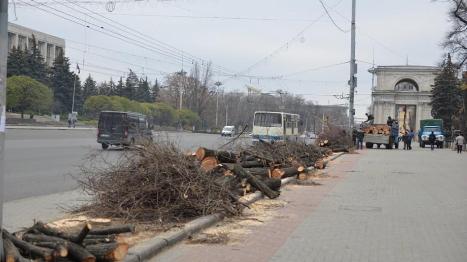 Chișinău: Luni se vor desfășura lucrări de defrișare şi curățare a arborilor pe mai multe străzi