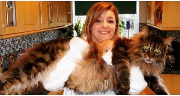 10 pisici uriașe pe care oamenii le au ca animale de companie