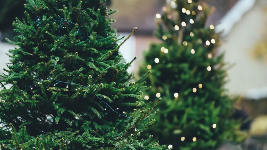 Începe vânzarea Pomilor de Crăciun. Iată cum îi poți prelungi viața bradului tău