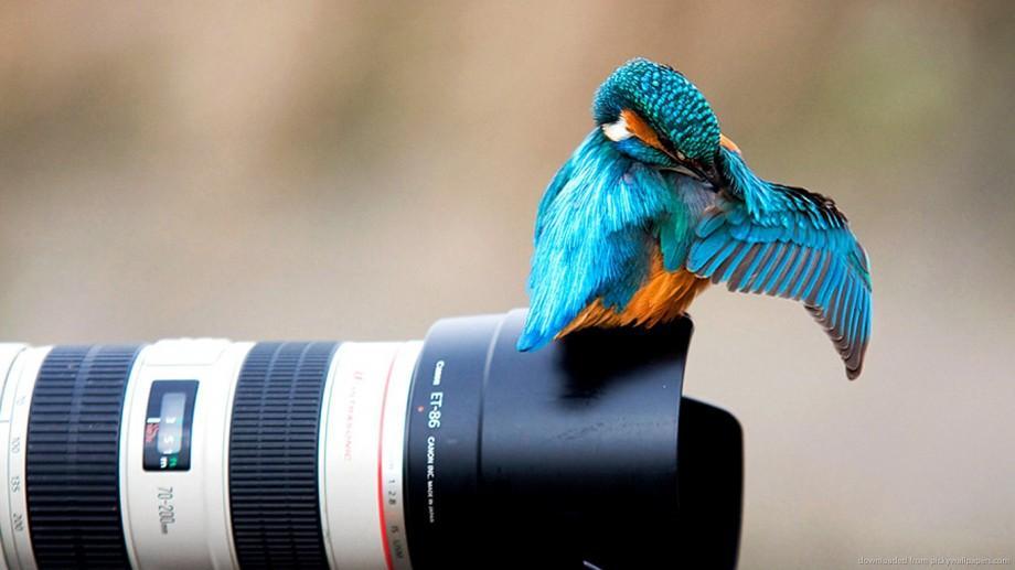 Participă la un concurs fotografic la care poți câștigă o călătorie la Amsterdam