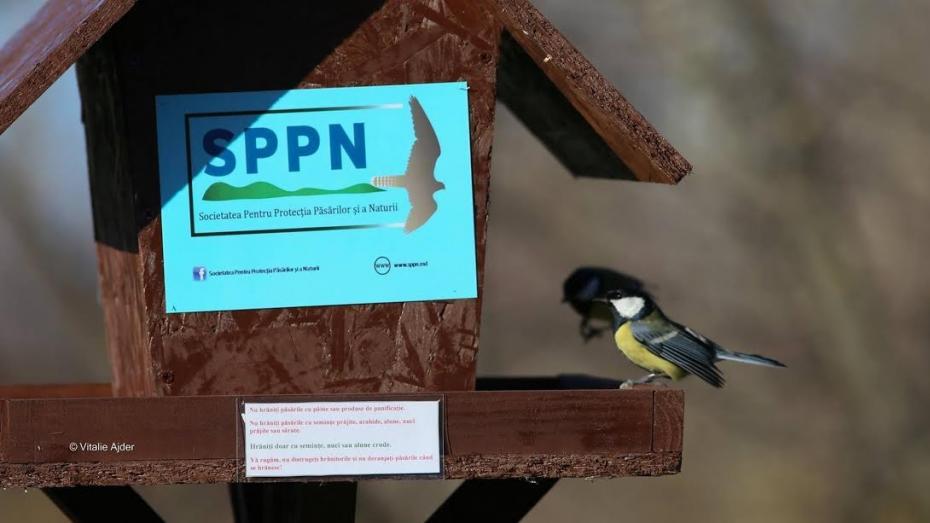 Fotografiază păsări la hrănitori în această iarnă și câștigă un ghid de identificare a păsărilor