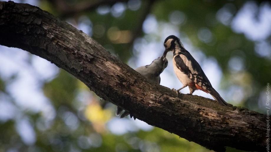 (foto) Moldova birds – blogul unde puteți vedea aproape toate păsările care sunt sau au trecut prin Moldova