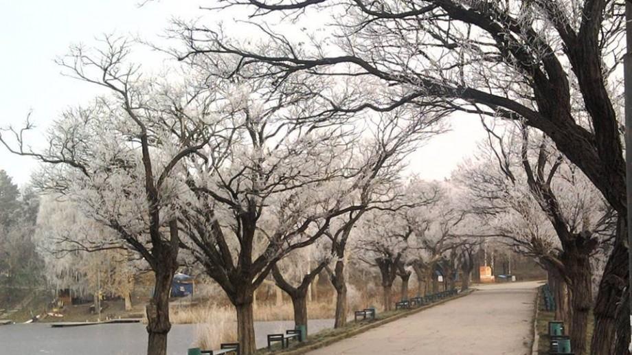 """Joi vor fi plantați noi arbori pe aleea defrișată din parcul """"Valea Trandafirilor"""""""