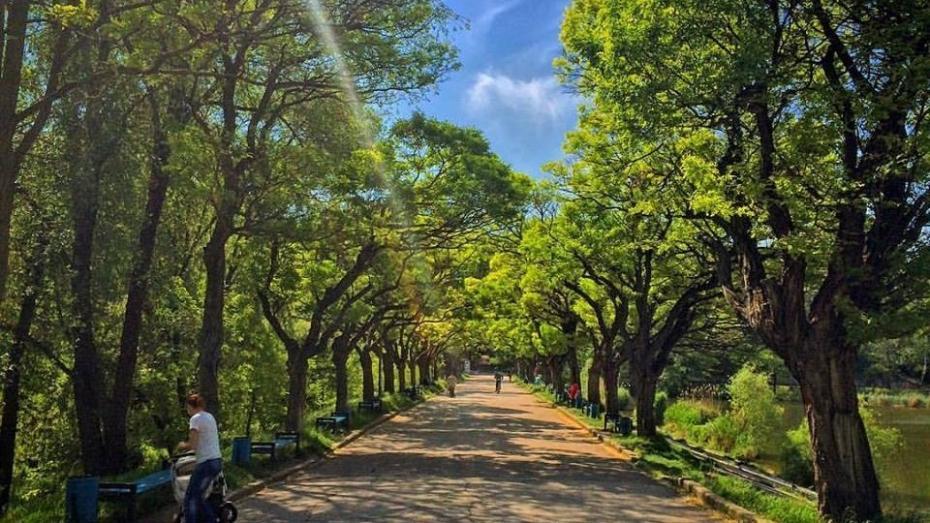 """(foto) Autoritățile au defrișat o pitorească alee de arbori din parcul """"Valea Trandafirilor"""""""