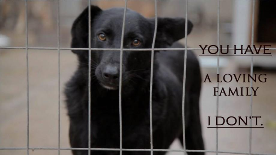 """(video) """"Help me, Human"""" – Donează pentru îmbunătățirea condițiilor în adăposturile pentru animale"""