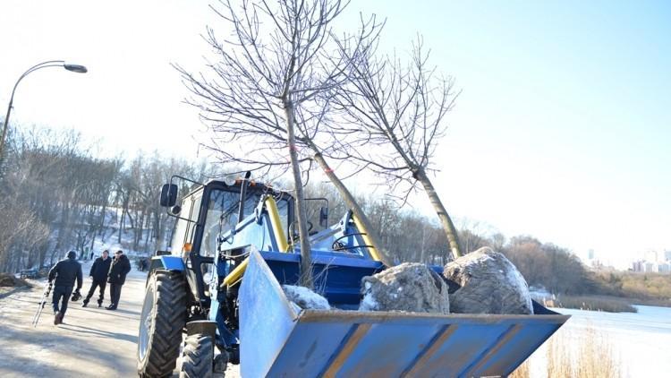 """(foto) Aleea defrișată din parcul """"Valea Trandafirilor"""" s-a ales cu 40 de arbori tineri"""