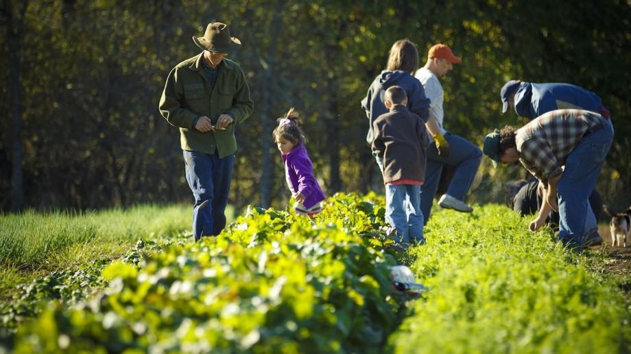 Oportunitate! Tinerii specializați în agricultură sunt așteptați la studii postuniversitare în Ungaria