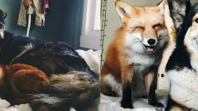 (foto) Prietenie adevărată! Imaginile incredibile cu animale care au crescut împreună