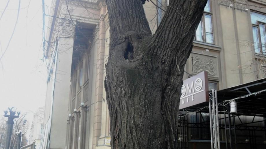 (video) Autoritățile vor defrișa aproape 600 de arbori din zona centrală a Chișinăului