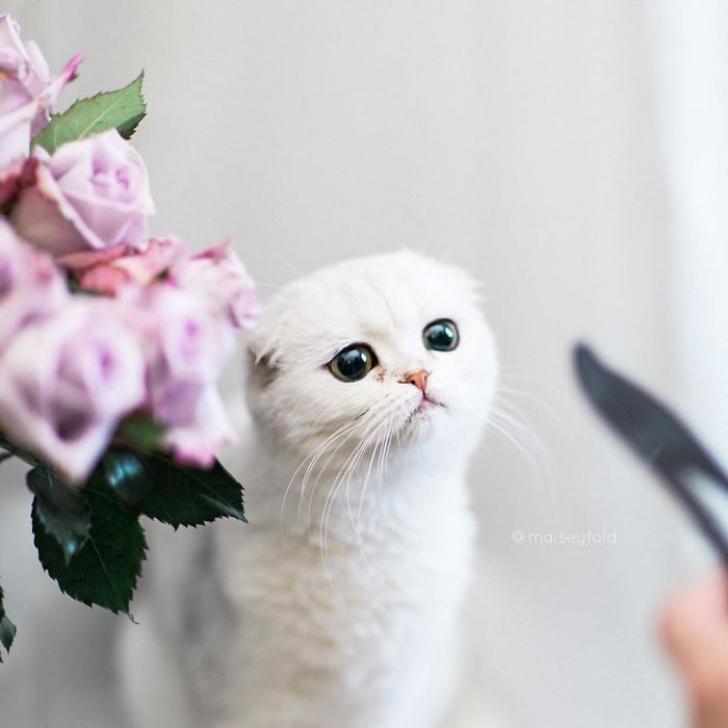 pisica10