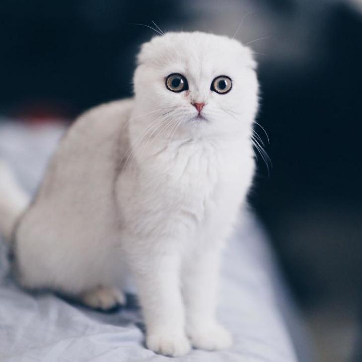 pisica5