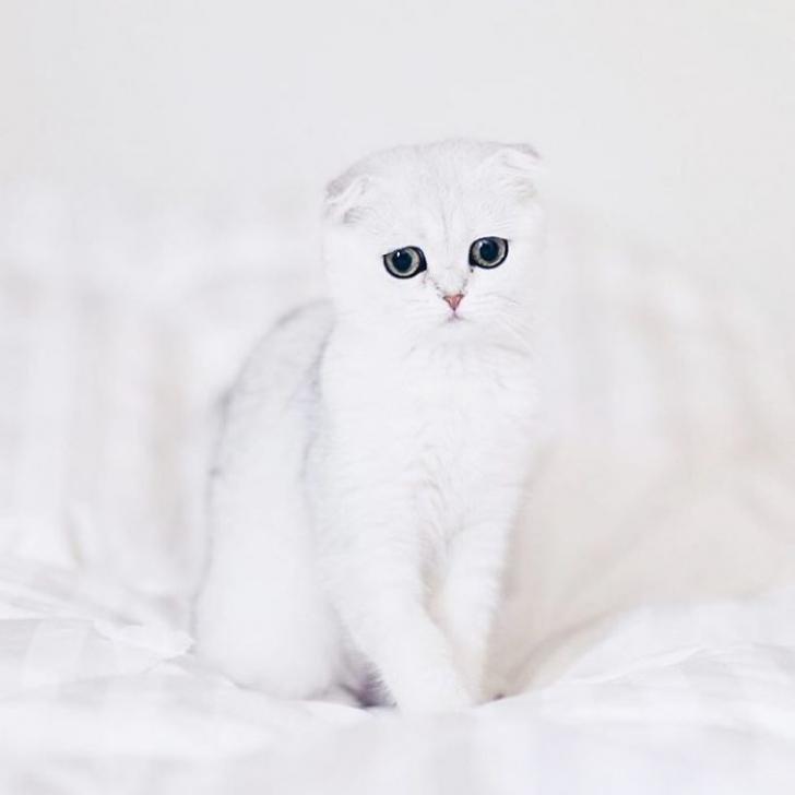 pisica7