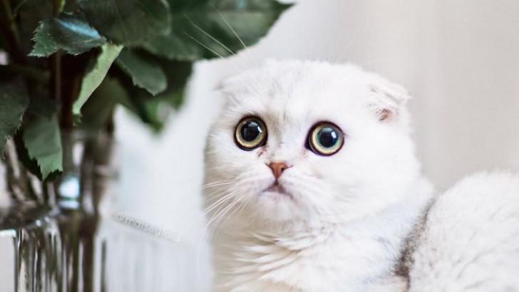 (foto) Cea mai drăgălașă pisică! Privirea ei îţi va topi instant inima