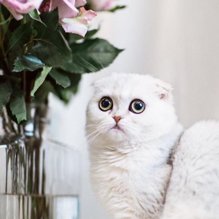 pisica9