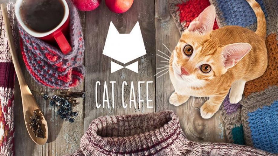 (foto) Cafeneaua unde gazdele sunt felinele. Cat Cafe – localul perfect pentru iubitorii de pisici