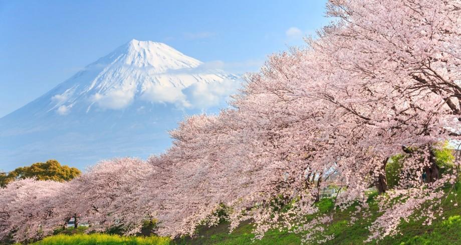 (foto) Vine, vine primăvara! Peisaje unice cu orășelul japonez în care au înflorit deja cireșii