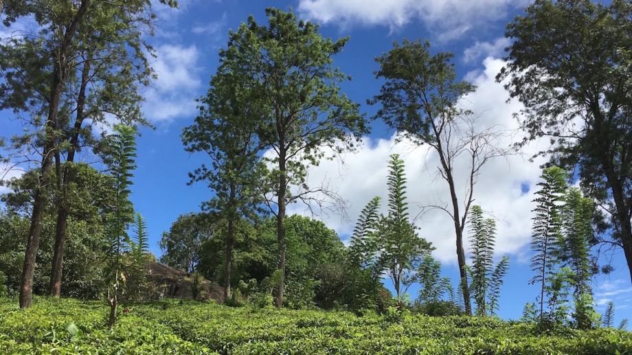 (foto) Călătorie în paradis: Experiența Gabrielei Petrov în Sri Lanka (partea I)