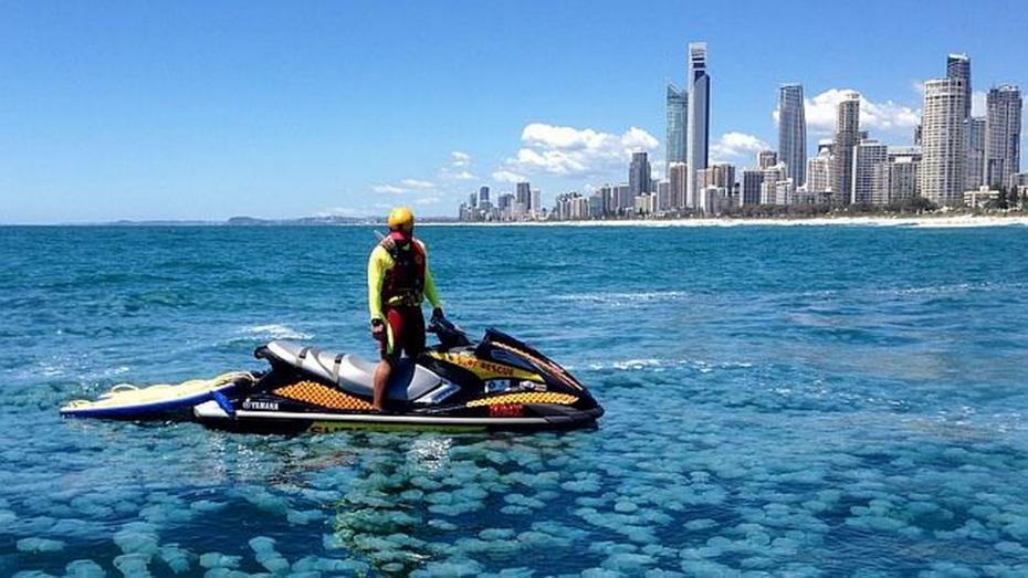 Jellyfish-on-Gold-Coast