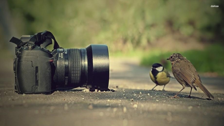 """Îți place fotografia de natură? Atunci participă la concursul de fotografie """"Comorile europene ale Naturii"""""""