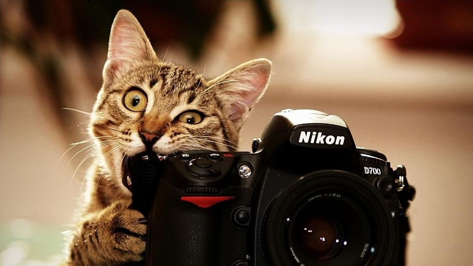 cat_as_photographer_by_microkey-d4ydm7b