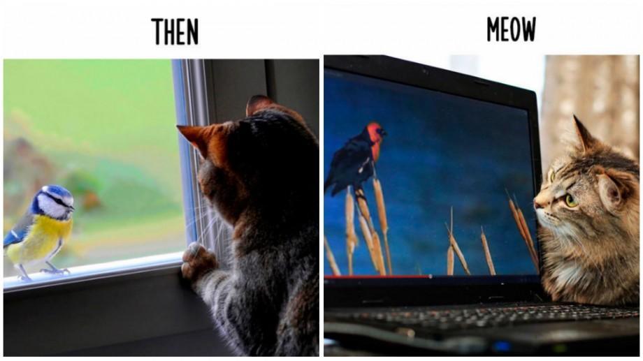 (foto) Atunci și acum. Cum tehnologiile au schimbat viața pisicilor