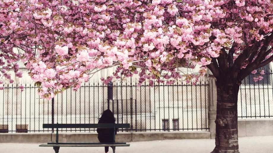 """(foto) Destinații ideale pentru vacanța de primăvară: 5 locuri deosebite pentru experiențe """"înfloritoare"""""""