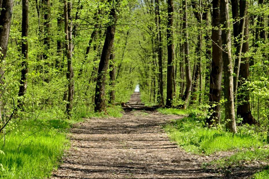 În Moldova a fost lansată campania dedicată Zilei Internaţionale a Pădurilor
