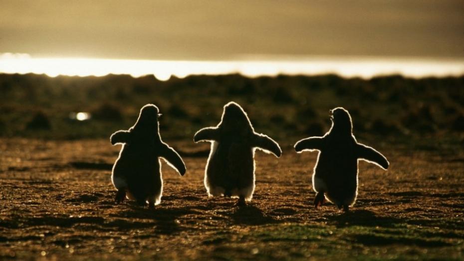 (foto) O porție de drăgălășenii de Ziua Mondială a Faunei Sălbatice