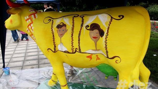 (video) Festivalul văcuțelor pictate colorat revine! Iată când și unde va avea loc