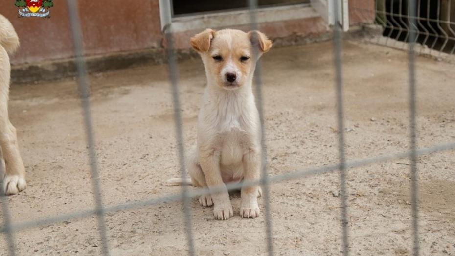 Centru de plasament pentru animalele fără stăpân de la Orhei își mărește capacitatea