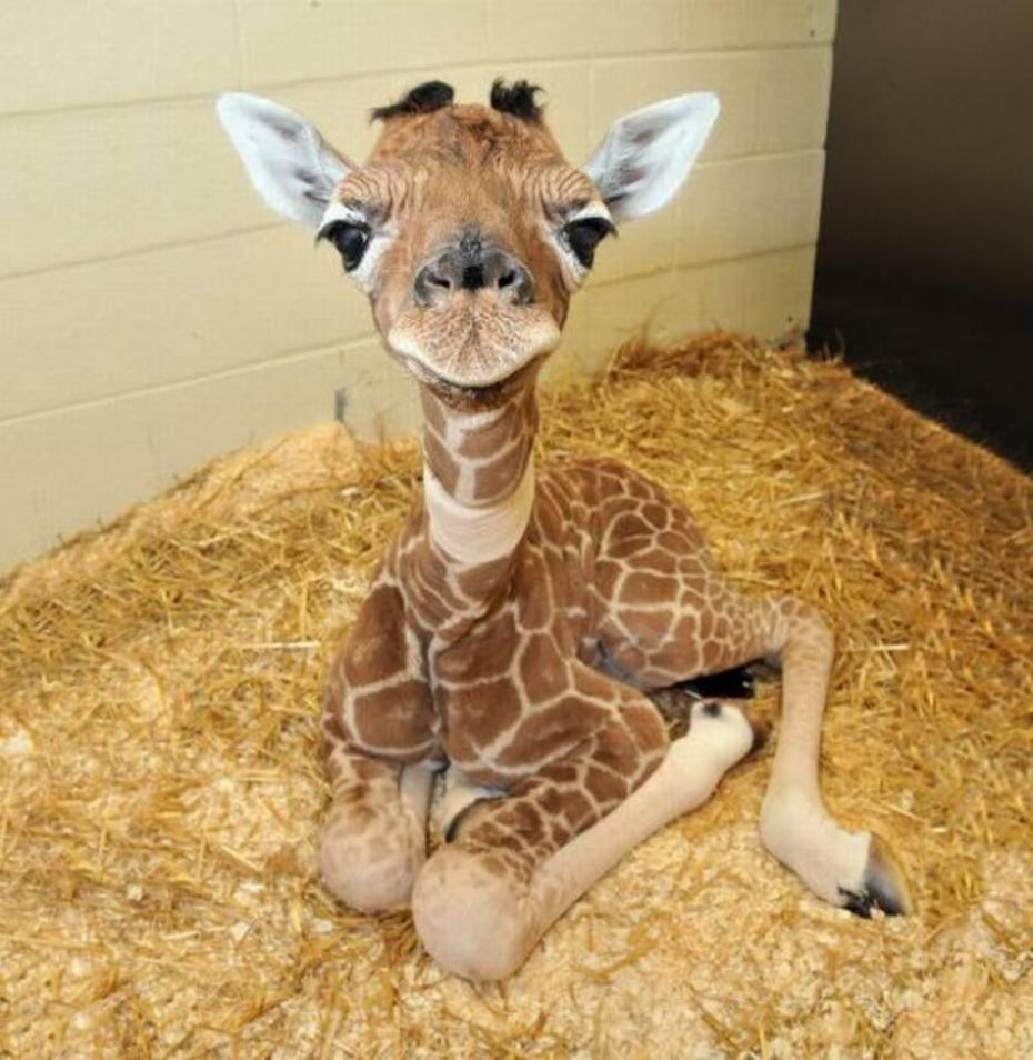 cute-baby-animals-2-585x600