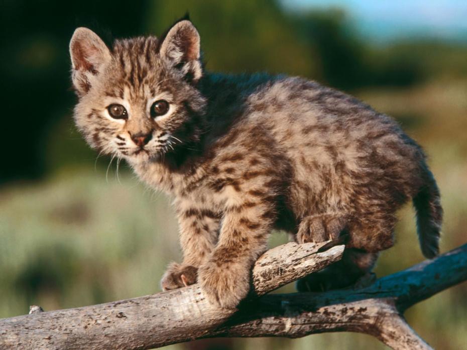 cutest-wild-animals-2931